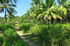 sipalay sugar beach lot for sale 1
