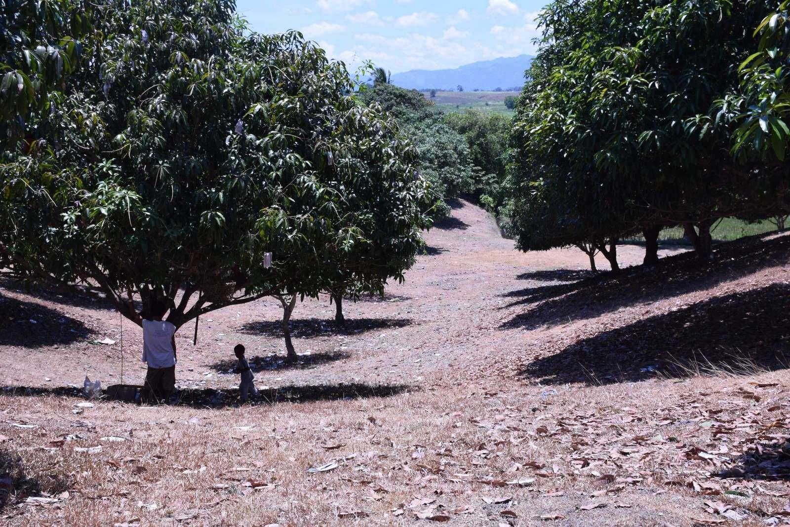 San Juan Island Farm Land For Sale