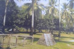 zamboanguita mango plantation