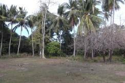 2000 sqm dauin lot for sale (1)