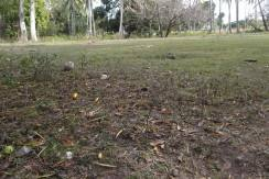 2000 sqm dauin lot for sale (10)
