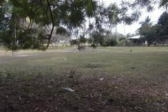 2000 sqm dauin lot for sale (12)