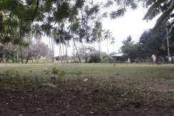 2000 sqm dauin lot for sale (13)