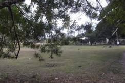 2000 sqm dauin lot for sale (14)