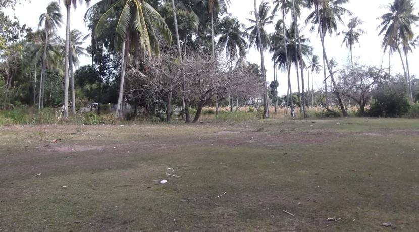2000 sqm dauin lot for sale (15)