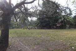 2000 sqm dauin lot for sale (17)