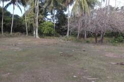 2000 sqm dauin lot for sale (2)