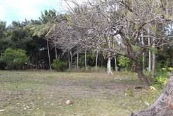 2000 sqm dauin lot for sale (21)