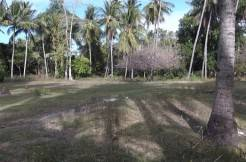 2000 sqm dauin lot for sale