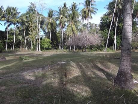2000 sqm dauin lot for sale (23)