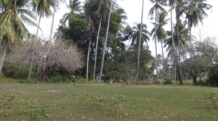2000 sqm dauin lot for sale (3)
