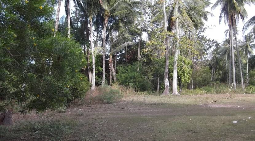 2000 sqm dauin lot for sale (8)