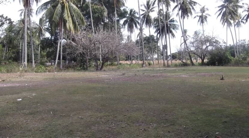 2000 sqm dauin lot for sale (9)