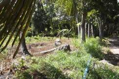 valencia negros oriental lot for sale