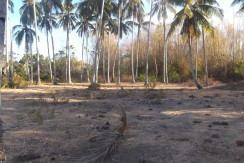 1.6 ha bacong lot for sale