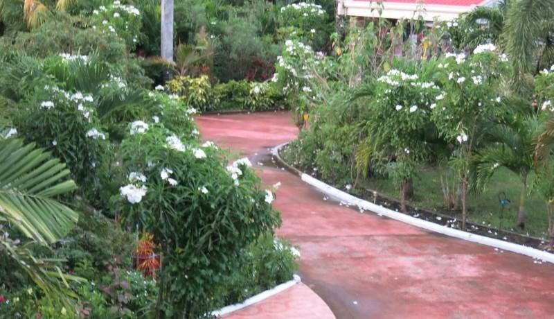 negros country mansion for sale (9)