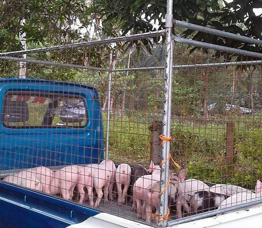 pig farm for sale (10)