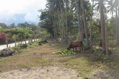 pig farm for sale (11)