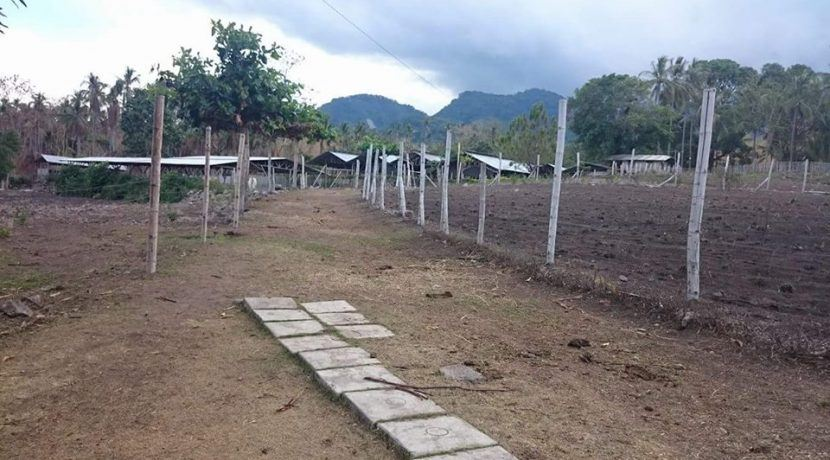 pig farm for sale (18)