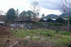 pig farm for sale (19)