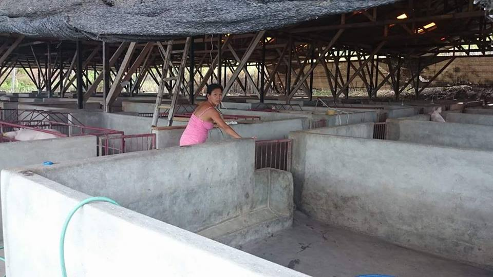 BACONG PIG FARM FOR SALE