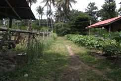 dauin-country-lot-for-sale-1
