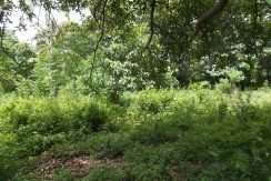 dauin-country-lot-for-sale-10