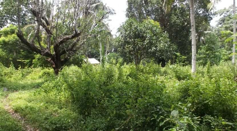dauin-country-lot-for-sale-11
