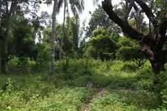 dauin-country-lot-for-sale-12