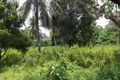 dauin-country-lot-for-sale-13