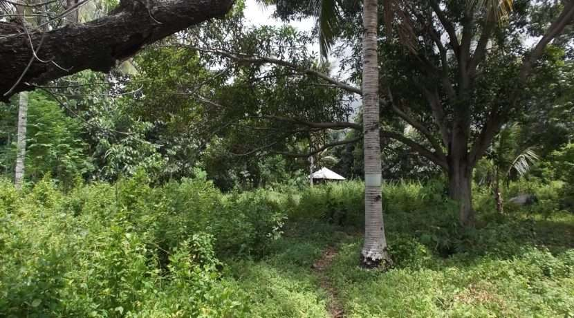 dauin-country-lot-for-sale-14