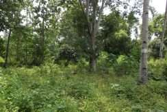 dauin-country-lot-for-sale-15