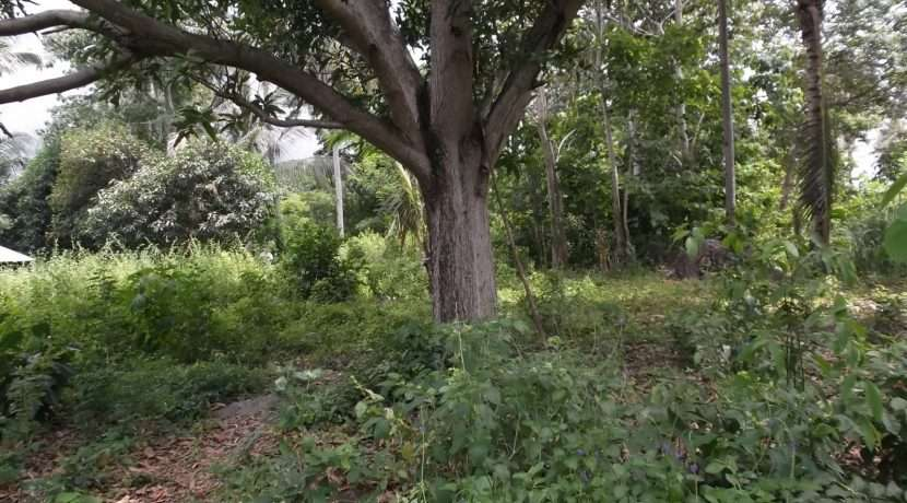 dauin-country-lot-for-sale-16