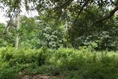 dauin-country-lot-for-sale-17
