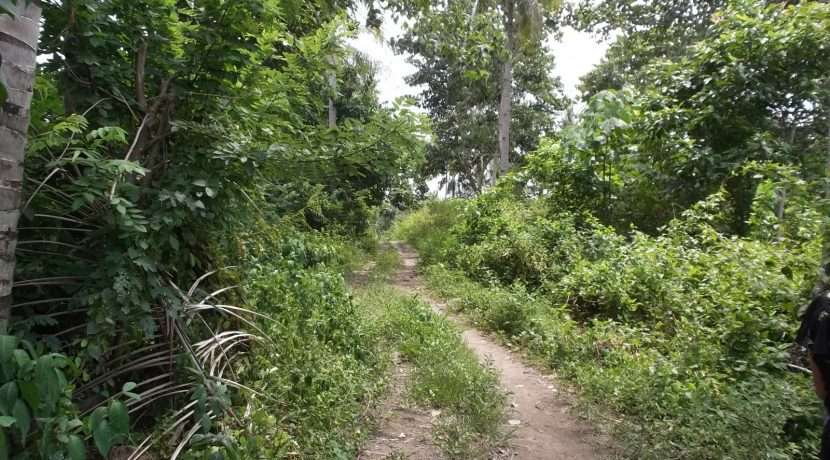 dauin-country-lot-for-sale-18
