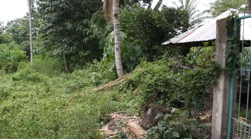 dauin-country-lot-for-sale-19