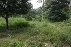 dauin-country-lot-for-sale-20