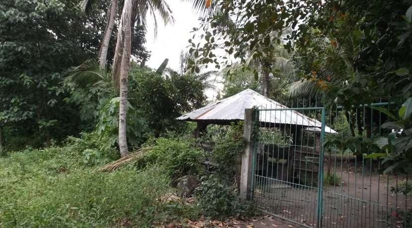 dauin-country-lot-for-sale-21
