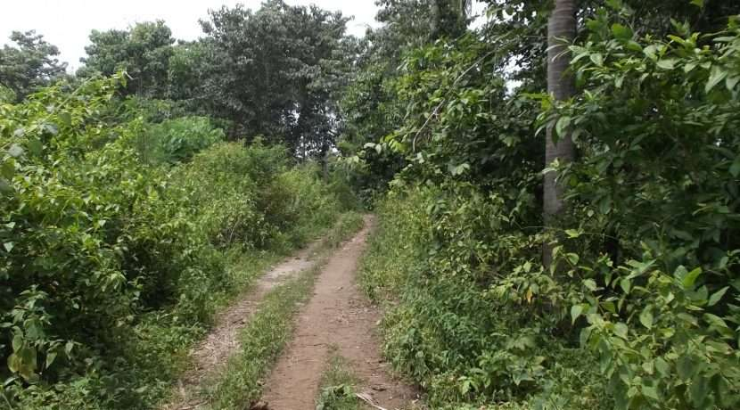 dauin-country-lot-for-sale-23