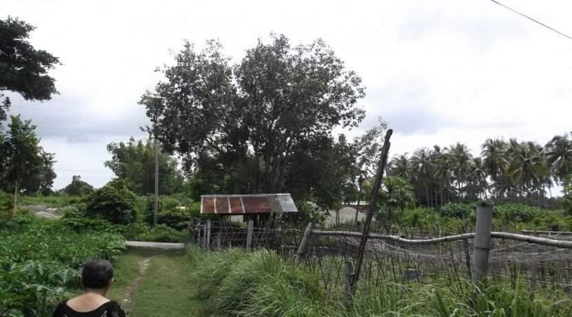 dauin-country-lot-for-sale-25