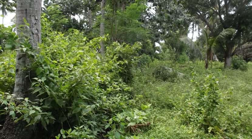 dauin-country-lot-for-sale-5