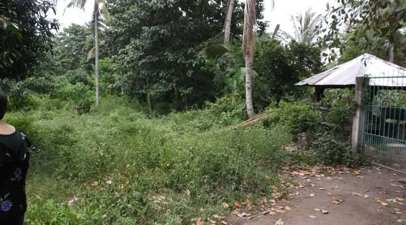 dauin-country-lot-for-sale-6