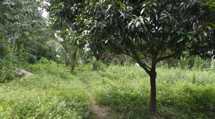 dauin-country-lot-for-sale-7