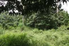 dauin-country-lot-for-sale-8