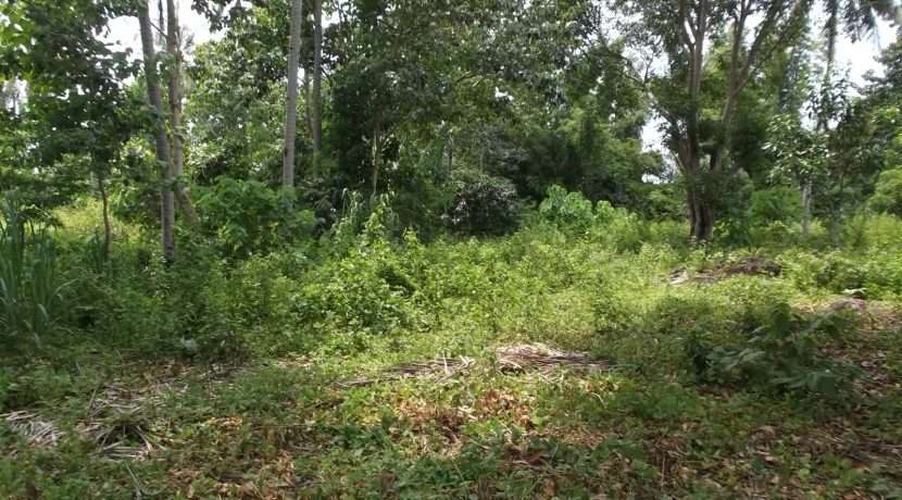 dauin-country-lot-for-sale-9