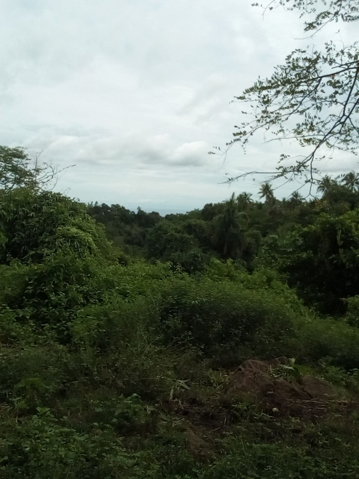 BACONG COUNTRY PROPERTY FOR SALE