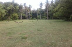 bacong property for sale