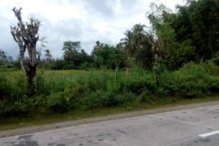 dauin land on the national highway
