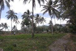bacong farm lot for sale