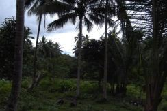 land for sale in valencia negros oriental